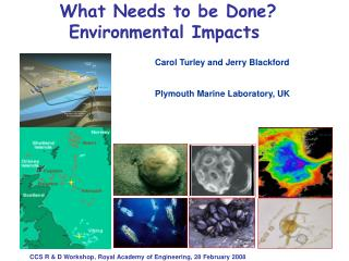 What Needs to be Done?   Environmental Impacts