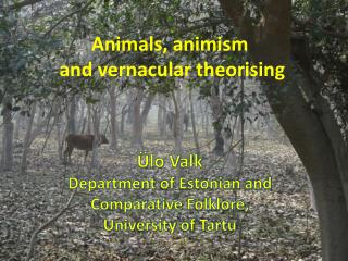 Animals , animism  and  vernacular theorising