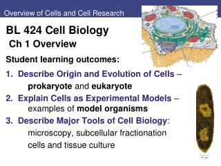 Overview of Cells and Cell Research