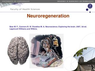 Neuroregeneration