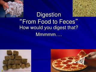 "Digestion "" From Food to Feces """