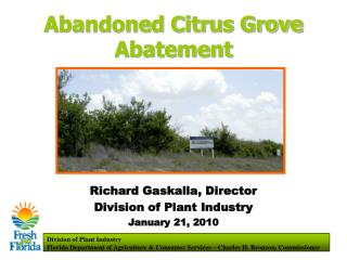 Abandoned Citrus Grove Abatement