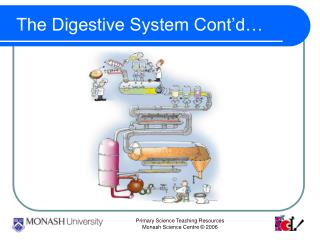 The Digestive System Cont'd…