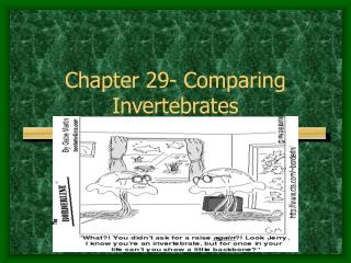 Chapter 29- Comparing Invertebrates