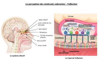 Mucus (OTP)