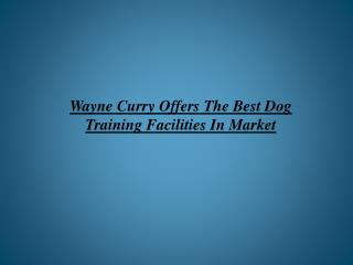 Wayne Curry Offers The Best Dog Training Facilities In Marke