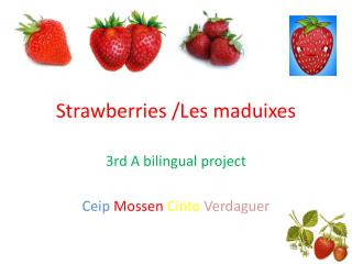 Strawberries  /Les  maduixes