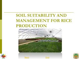 SOIL SUITABILITY AND MANAGEMENT FOR RICE PRODUCTION