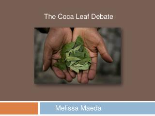 The Coca Leaf Debate