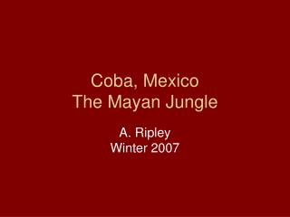 Coba, Mexico The Mayan Jungle