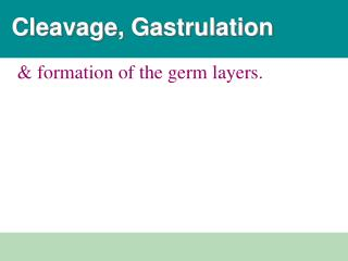 Cleavage, Gastrulation