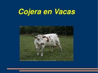 Cojera en Vacas