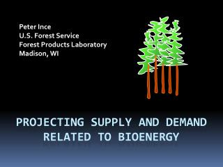 Projecting supply and demand related to bioenergy
