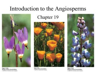 Introduction to the Angiosperms