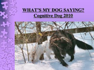 WHAT'S MY DOG SAYING? Cognitive Dog 2010 Carolyn Barney, CPDT