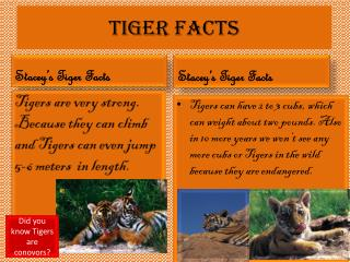 Tiger Facts