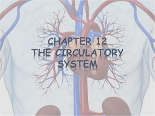 Chapter 12 The Circulatory System