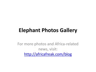 Elephant photos to download for free
