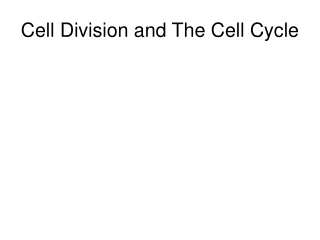 CELL CYCLE  MITOSIS REVIEW