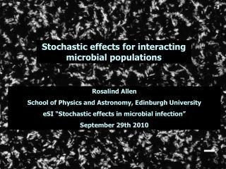 Stochastic effects for interacting microbial populations