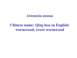 Artemisia annua Chinese name: Qing hoa su English: wormwood, sweet wormwood