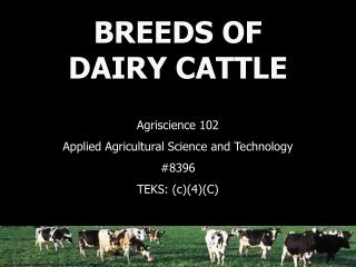 BREEDS OF DAIRY CATTLE