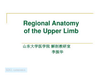 Regional Anatomy  of the Upper Limb