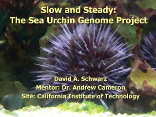 Slow and Steady: The Sea Urchin Genome Project