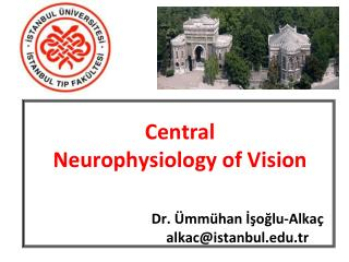 Central Neurophysiology of Vision
