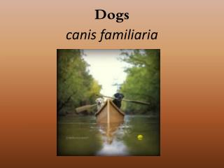 Dogs canis familiaria
