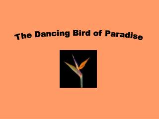 The Dancing Bird of Paradise