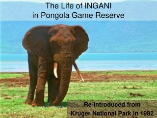 The Life of INGANI in Pongola Game Reserve