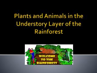 Plants and Animals in the Understory Layer of the Rainforest