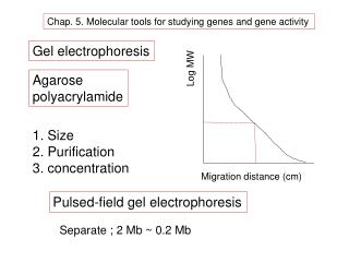 Chap. 5. Molecular tools for studying genes and gene activity