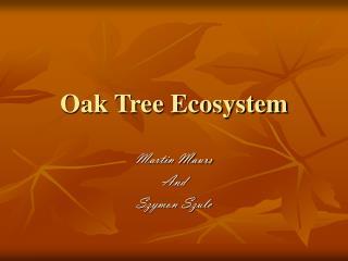 Oak Tree Ecosystem