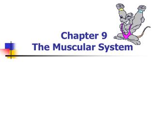 Chapter 9 The Muscular System