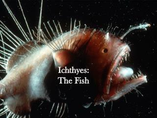 Ichthyes:  The Fish