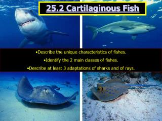 25.2 Cartilaginous Fish