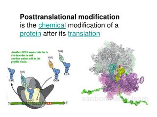 Post-Translational Modification 1. Dealing with the N-terminal residue
