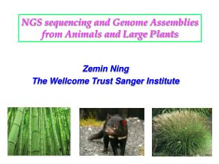 NGS sequencing and Genome Assemblies from Animals and Large Plants