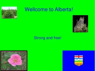Wellcome to Alberta!
