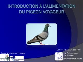 Introduction à L'Alimentation du Pigeon voyageur