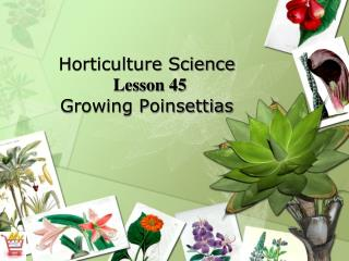 Horticulture Science Lesson 45 Growing Poinsettias