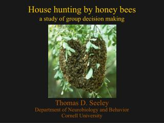 House hunting by honey bees a study of group decision making