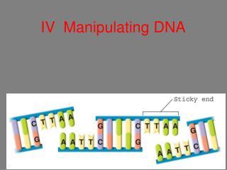 IV Manipulating DNA