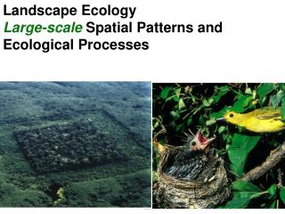 Landscape Ecology Large-scale  Spatial Patterns and Ecological Processes