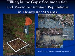 Filling in the Gaps: Sedimentation and Macroinvertebrate Populations in Headwater Streams