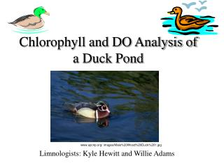 Chlorophyll and DO Analysis of a Duck Pond
