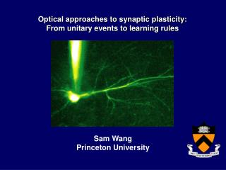 Optical approaches to synaptic plasticity:  From unitary events to learning rules