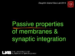 Passive properties of membranes & synaptic integration